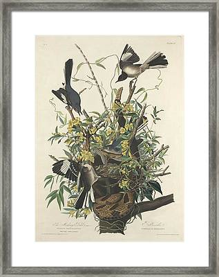 The Mockingbird Framed Print
