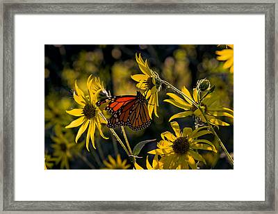 The Monarch And The Sunflower Framed Print by Rick Berk