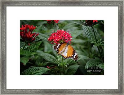 The Monarch Butterfly Framed Print by Michelle Meenawong