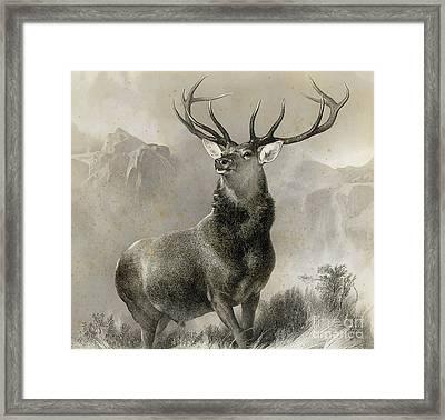 The Monarch Of The Glen, 1852 Framed Print