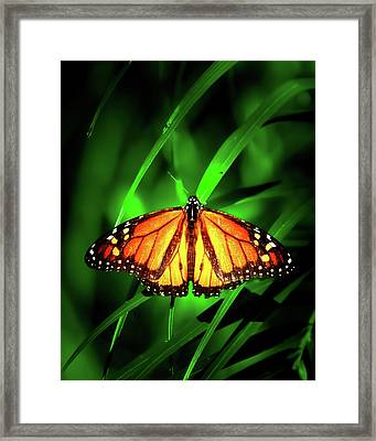 The Monarch Tree Framed Print by Mark Andrew Thomas