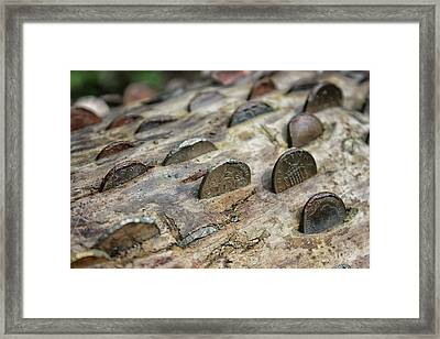 The Money Tree Framed Print by Martin Newman