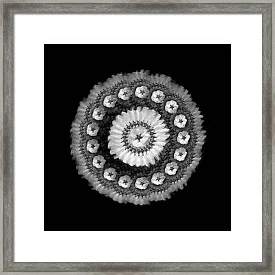 The Monochromatic Beadwork And Feather Of Flower Framed Print by Jacqueline Migell