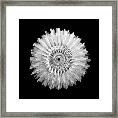 The Monochromatic Mandala Of Rose Framed Print by Jacqueline Migell