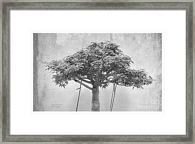 The Monochrome Bonsai Framed Print by Gary Richards