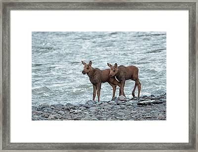The Moose Brothers Framed Print