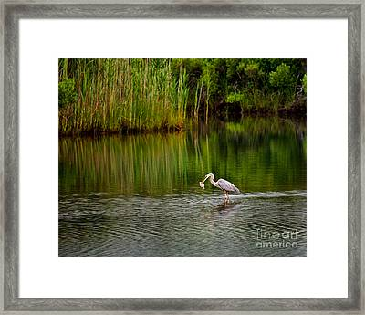 Framed Print featuring the photograph The Morning Catch by Mark Miller