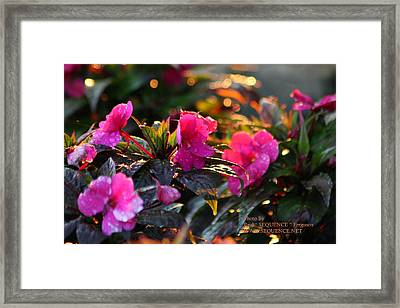 The Morning Flower Framed Print