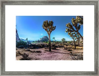The Morning Joshua Tree  Framed Print