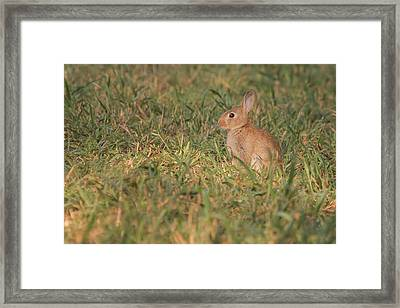 The Morning Kit Framed Print