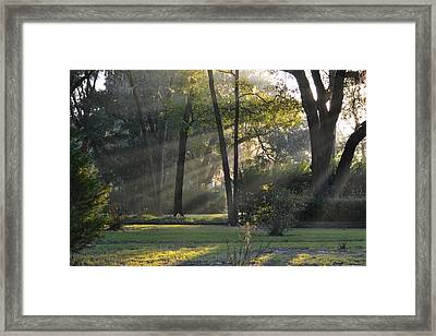 The Morning Sunlight Comes Shining Through Framed Print