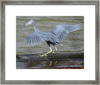 The Morsel After Scooch Framed Print