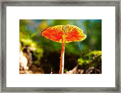 The Mushroom 10 - Mm Framed Print by Leonardo Digenio