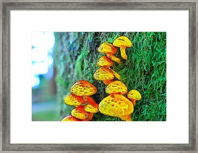 The Mushroom 12 - Da Framed Print