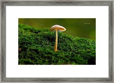 The Mushroom 15 - Mm Framed Print