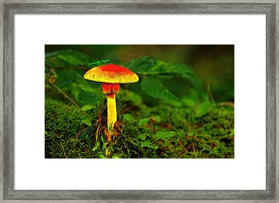 The Mushroom 16 - Da Framed Print by Leonardo Digenio