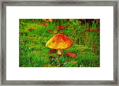 The Mushroom 19 - Da Framed Print by Leonardo Digenio