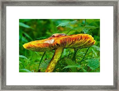 The Mushroom 22 - Pa Framed Print by Leonardo Digenio
