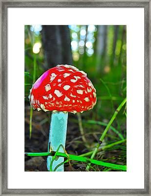 The Mushroom 3 - Pa Framed Print by Leonardo Digenio