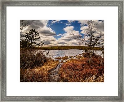 The Mysterious Pine Lands Framed Print by Louis Dallara