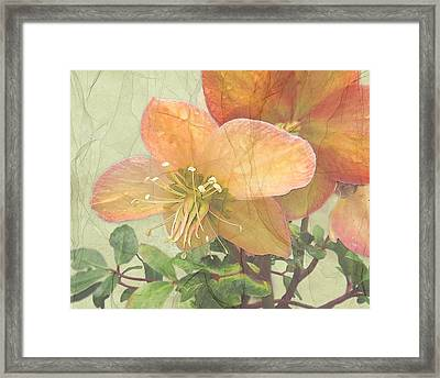 The Mystical Energy Of Nature Framed Print