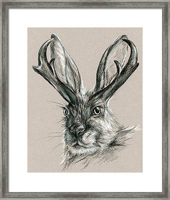 The Mythical Jackalope Framed Print by MM Anderson