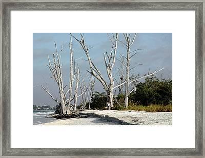 The Natural Beach Framed Print by Rosalie Scanlon