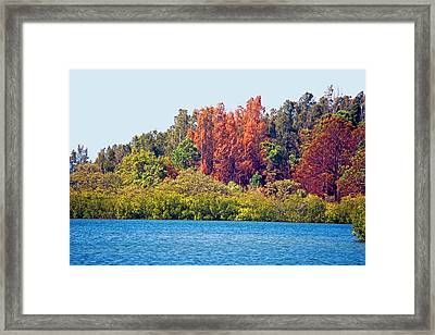 The Nature Coast Framed Print