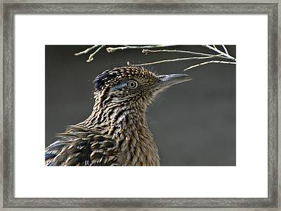The Need For Speed Framed Print by Fraida Gutovich