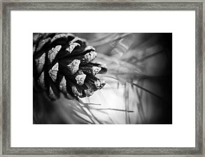 The Needlework Curtain Framed Print
