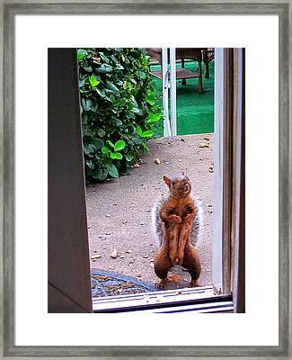 The Neighborhood Flasher Framed Print by Guy Ricketts
