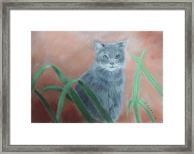 The Neighbor's Cat Framed Print