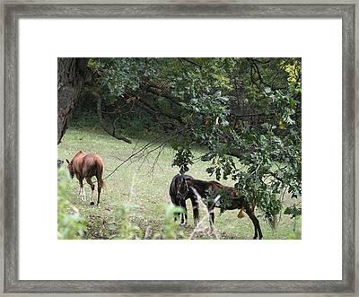 The Neighbors Horses Framed Print by Janis Beauchamp