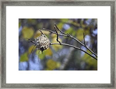The Nest 2 Framed Print