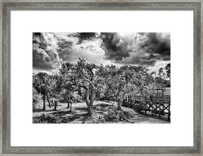 Framed Print featuring the photograph The Nest by Howard Salmon