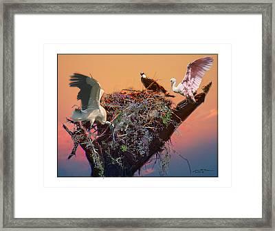 The Nest Framed Print by John Breen