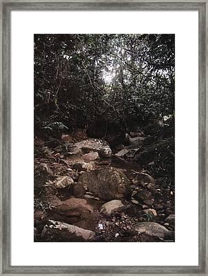 The Nest Of The River Framed Print by David Cardona