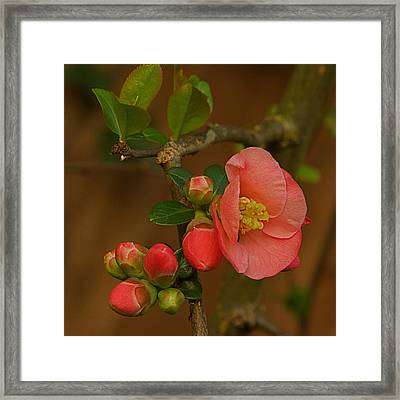 The New Beginning  Framed Print