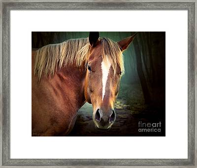 The New Horse  Framed Print by Mark Ashkenazi