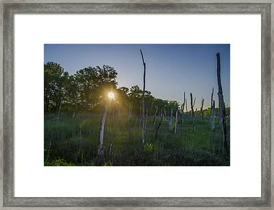 The New Jersey Pine Barrens Framed Print by Bill Cannon