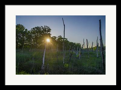Pine Barrens Digital Art Framed Prints
