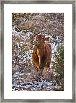 The New Years Cow Framed Print by Donna Greene