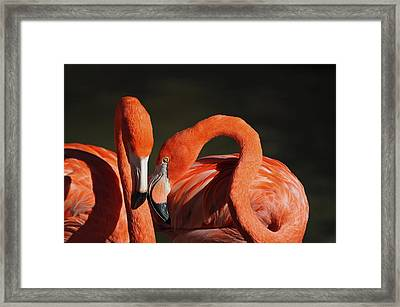 The Newlywed Framed Print by Thanh Thuy Nguyen