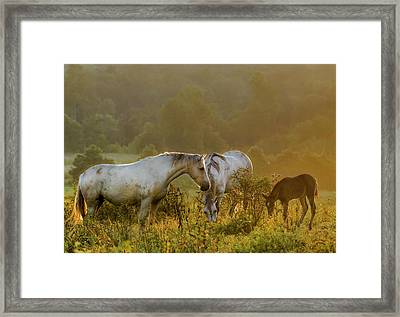The Next Generation Framed Print by Ron  McGinnis