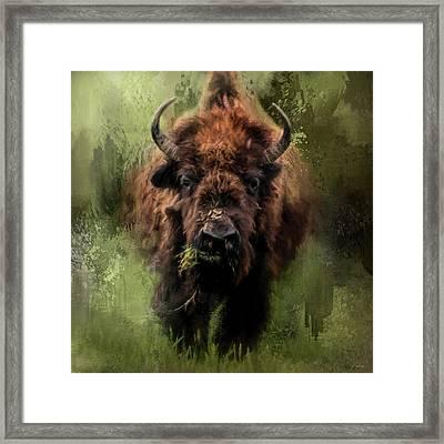 The Nibbler Bison Art By Jai Johnson Framed Print