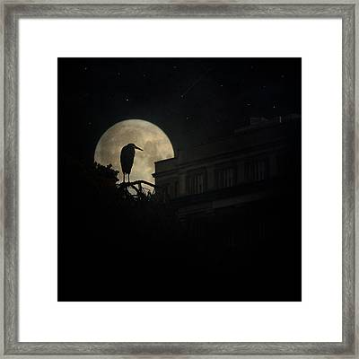 Framed Print featuring the photograph The Night Of The Heron by Chris Lord