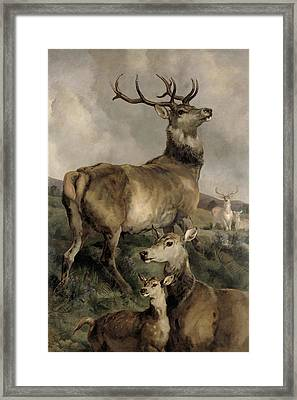 The Noble Beast Framed Print by Sir Edwin Landseer