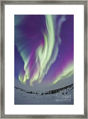 The Northern Lights In Churchill Framed Print by Alan Dyer
