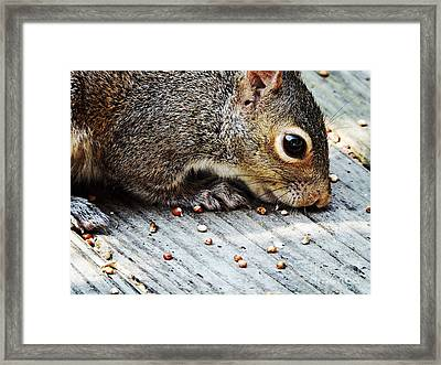 The Nose Has It  Framed Print by JW Hanley