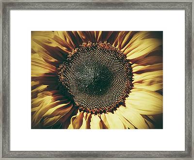 The Not So Sunny Sunflower Framed Print